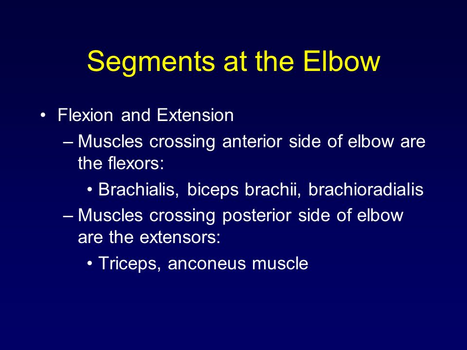 Segments at the Elbow Flexion and Extension