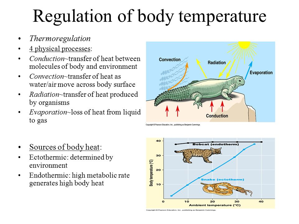 thermoregulation temperature and radiant heat Chapter 6 thermoregulation: physiology and perioperative disturbances  radiant heat loss  and t a is the ambient temperature (°c) the convective heat.