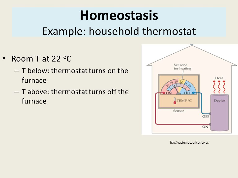Homeostasis Example: household thermostat