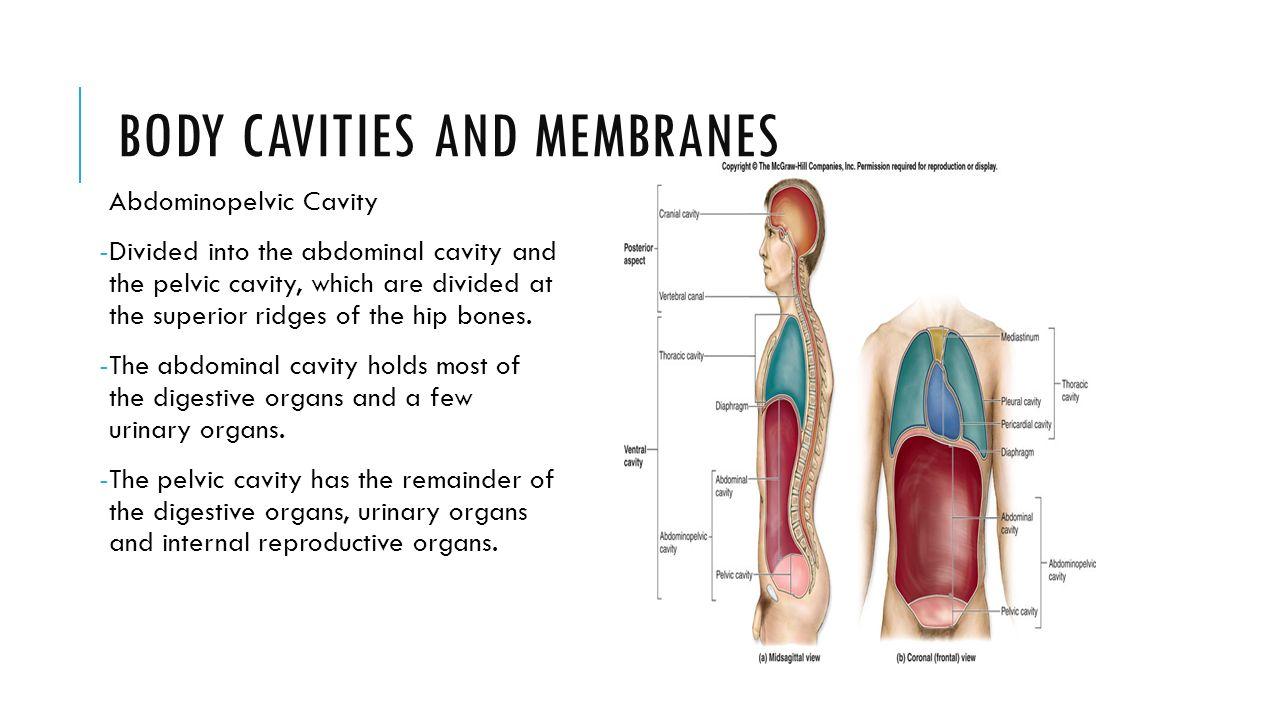Gemütlich Anatomy And Physiology Body Cavities Quiz Bilder ...