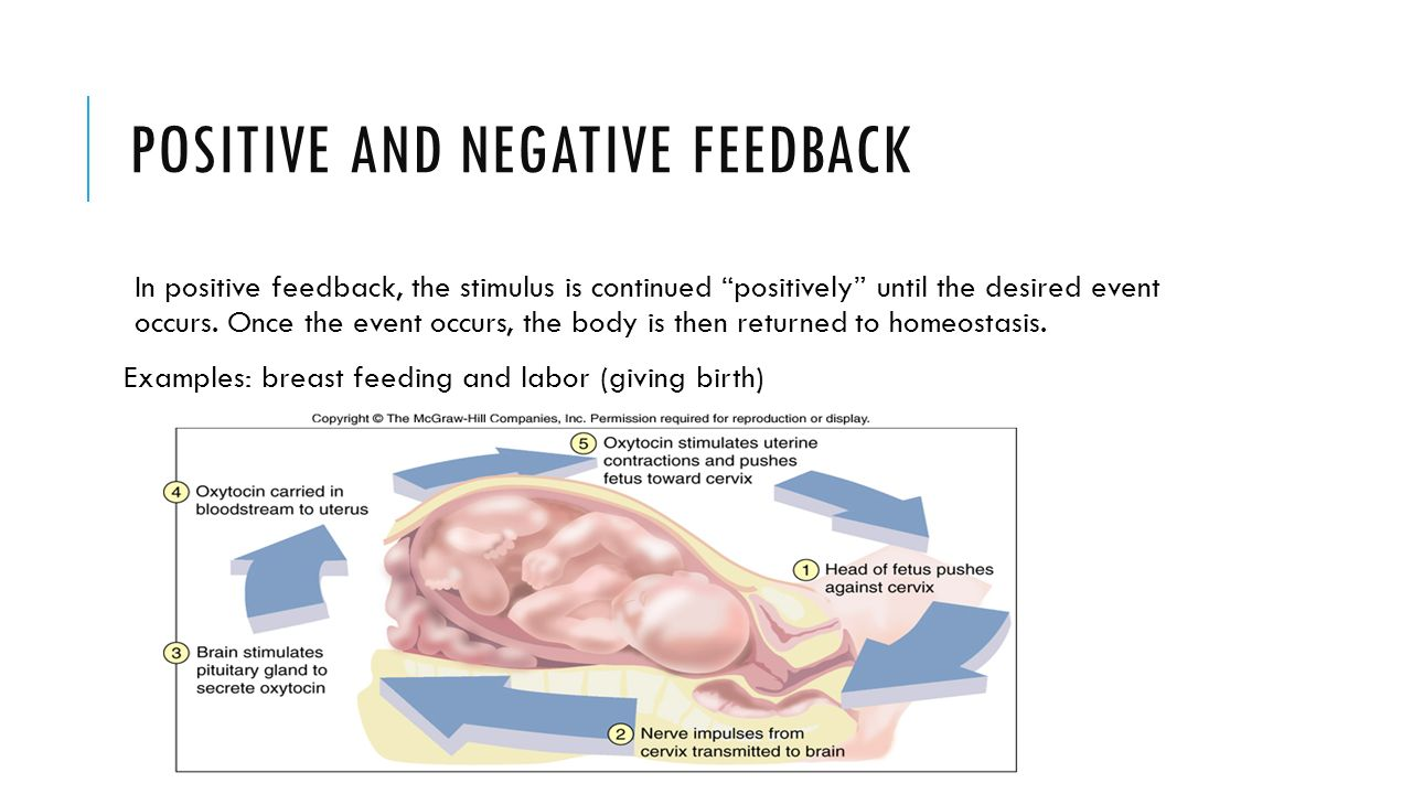 Dorable Examples Of Negative Feedback In Anatomy And Physiology ...