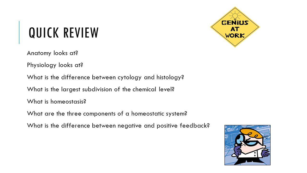 Amazing Subdivision Of Anatomy Ideas - Physiology Of Human Body ...