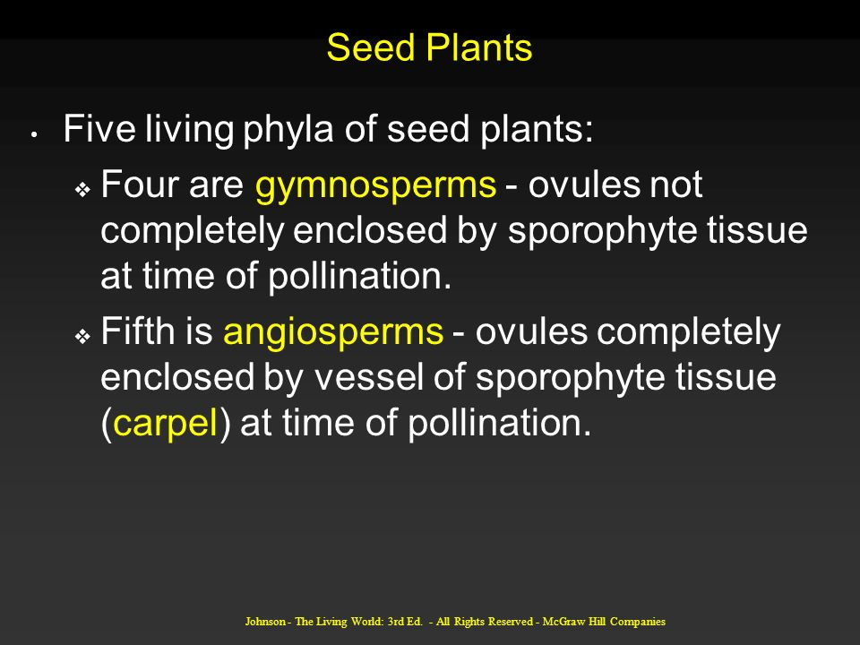 Five living phyla of seed plants: