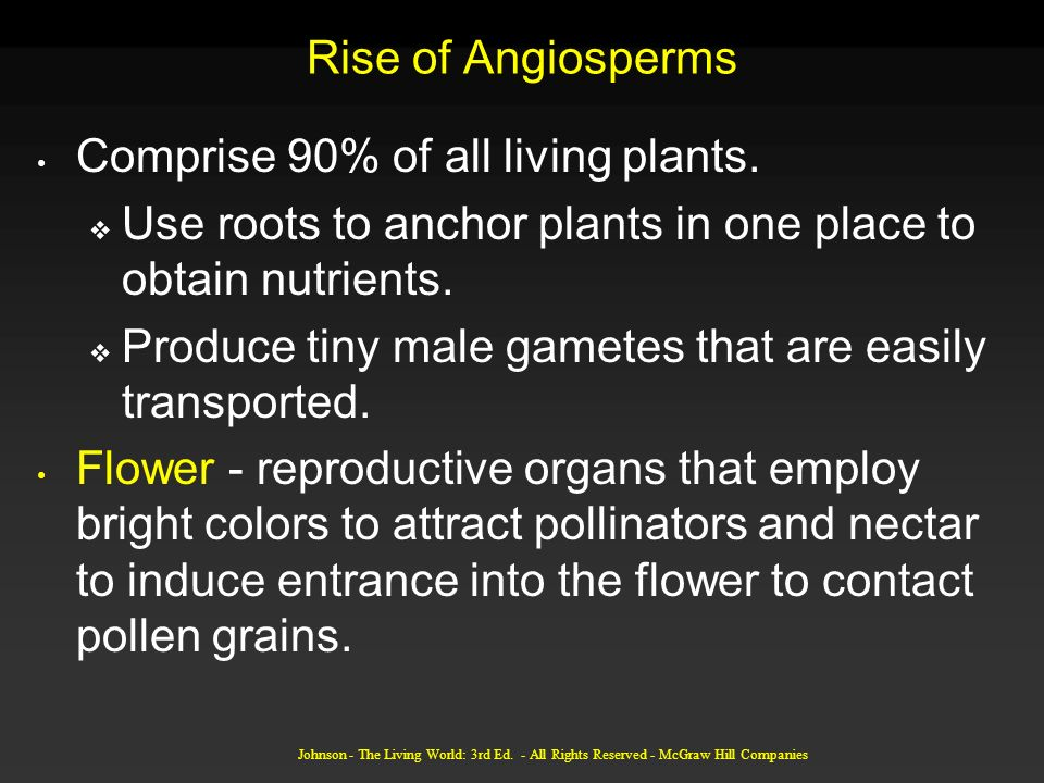 Comprise 90% of all living plants.