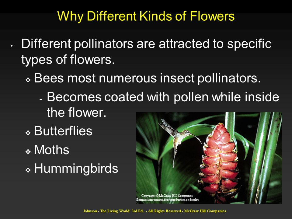 Why Different Kinds of Flowers