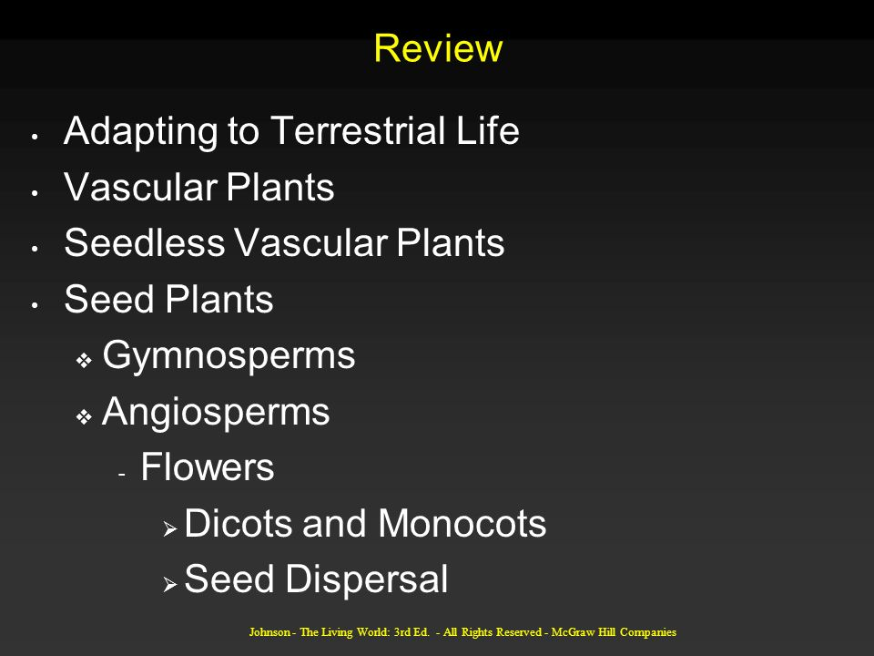 Adapting to Terrestrial Life Vascular Plants Seedless Vascular Plants