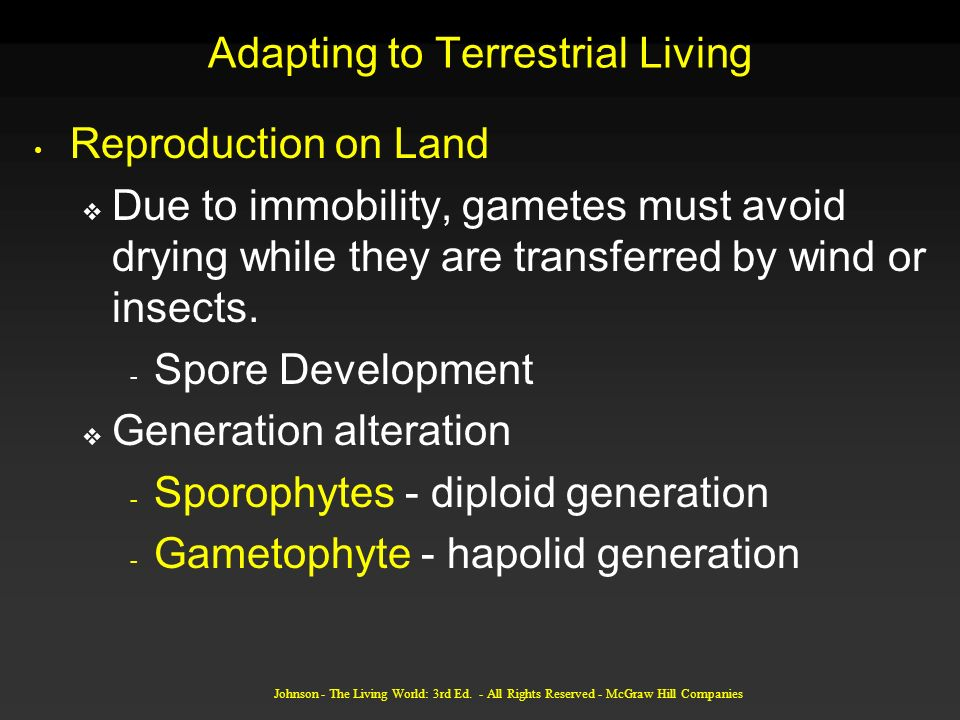 Adapting to Terrestrial Living