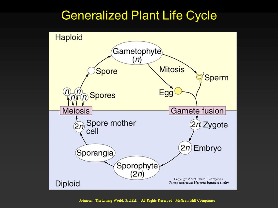 Generalized Plant Life Cycle
