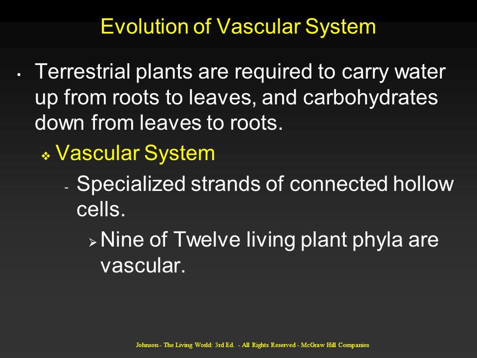Evolution of Vascular System