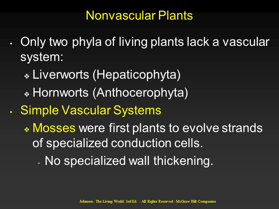 Only two phyla of living plants lack a vascular system: