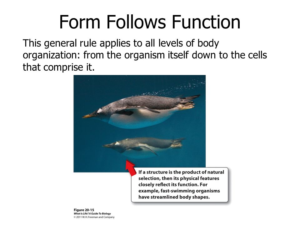 Chapter 20: Introduction to Animal Physiology - ppt download