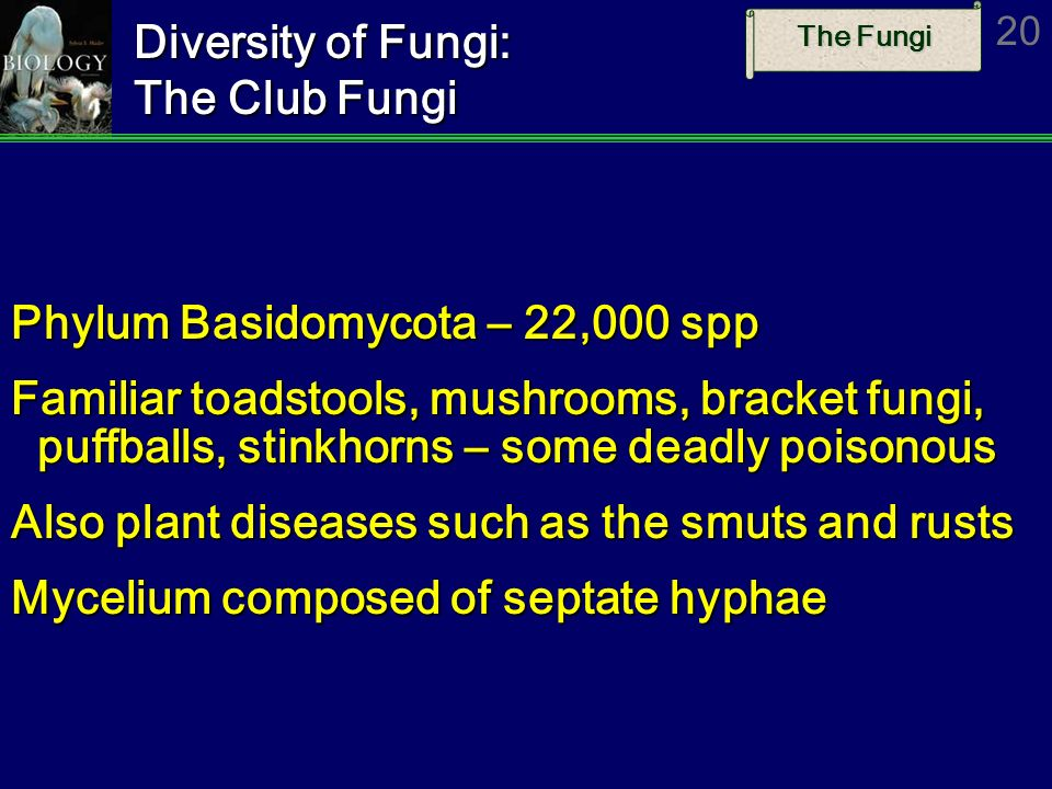 Diversity of Fungi: The Club Fungi