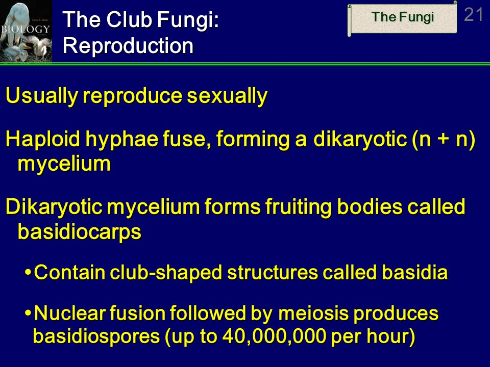 The Club Fungi: Reproduction