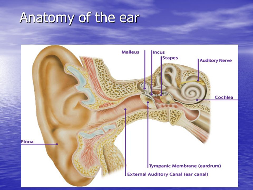 Anatomy Of The Ear Ppt Video Online Download