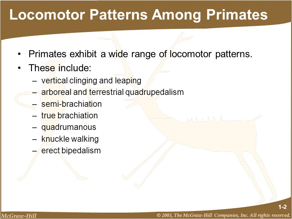 Locomotor Patterns Among Primates