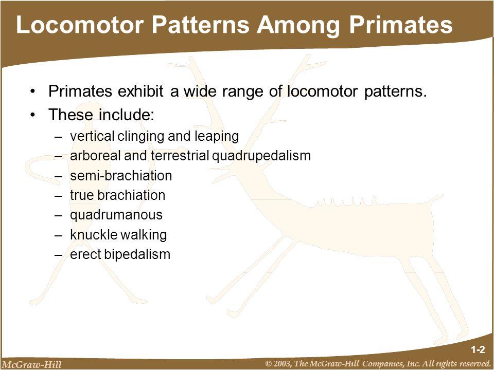 Locomotor Patterns Among Primates