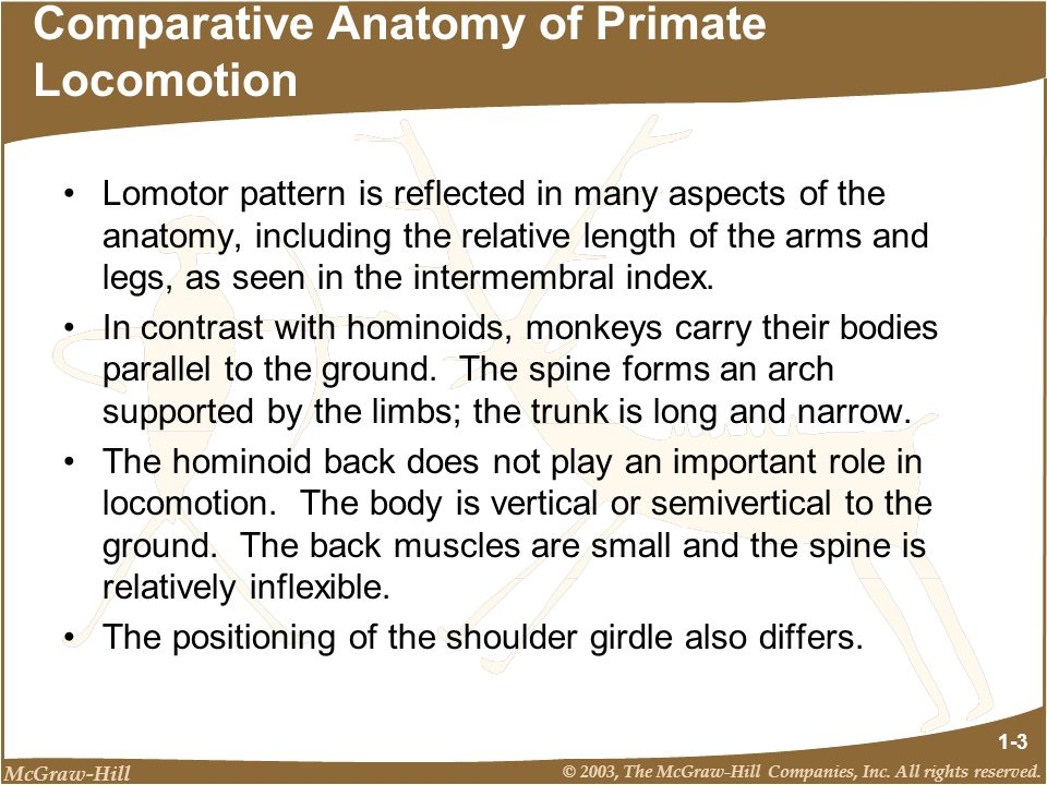 Comparative Anatomy of Primate Locomotion