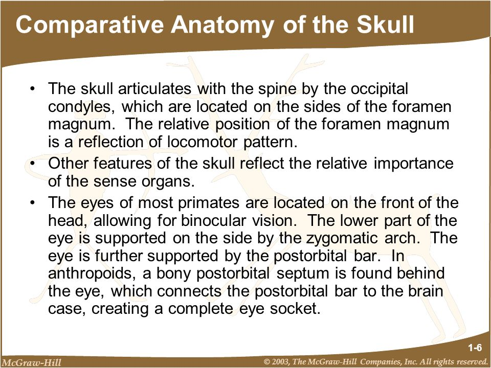 Comparative Anatomy of the Skull