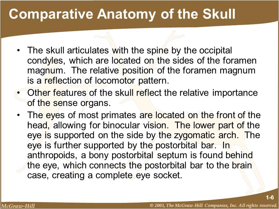 Comparative Anatomy of the Skull