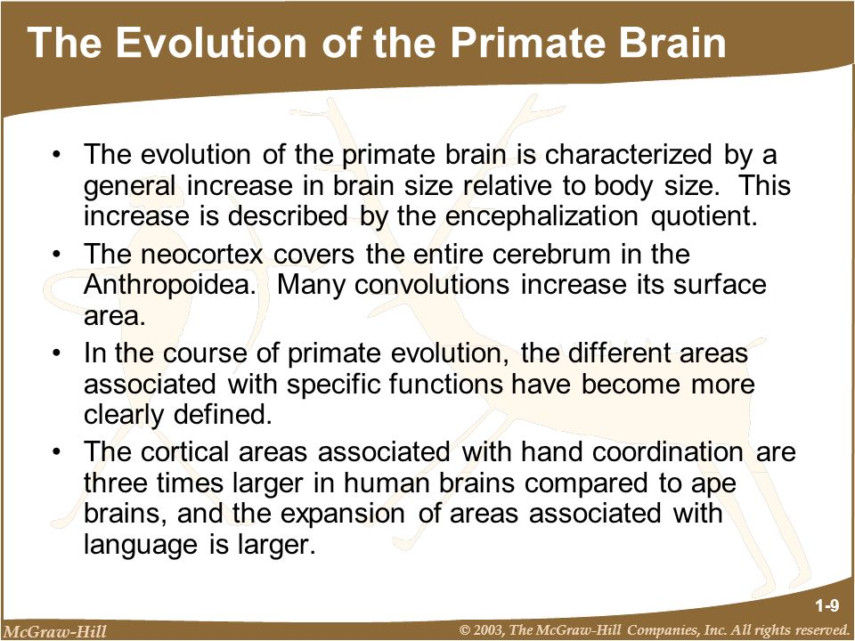 The Evolution of the Primate Brain