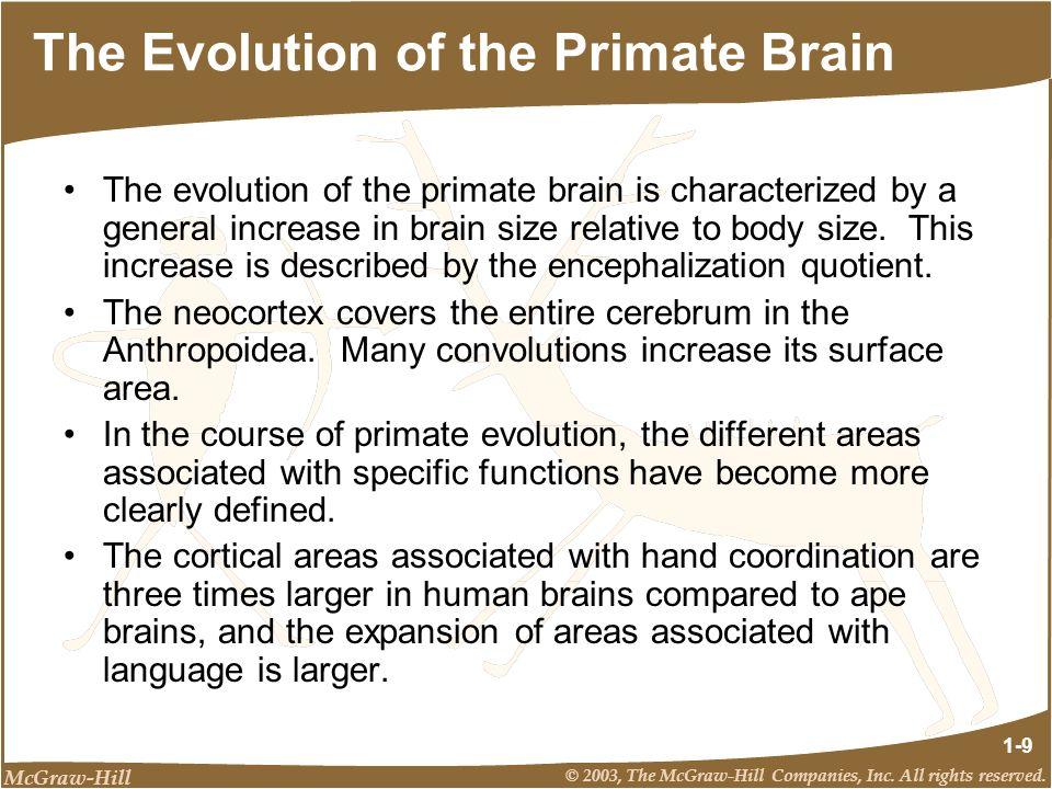 The Evolution of the Primate Brain