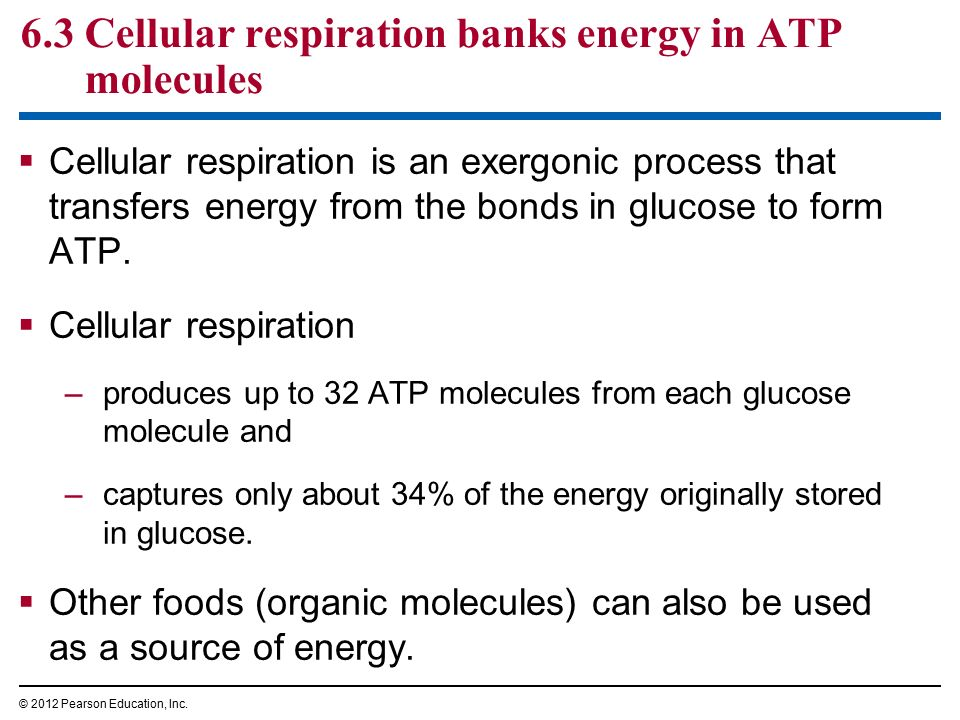 cellular respiration and energy designing essay