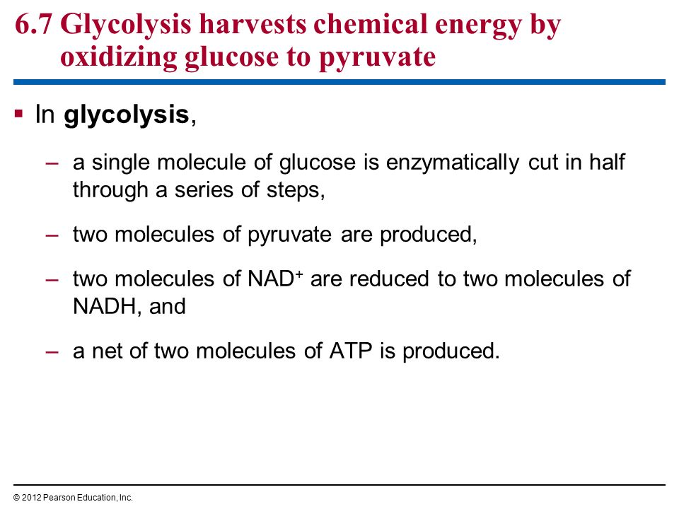 How Cells Harvest Chemical Energy - ppt download