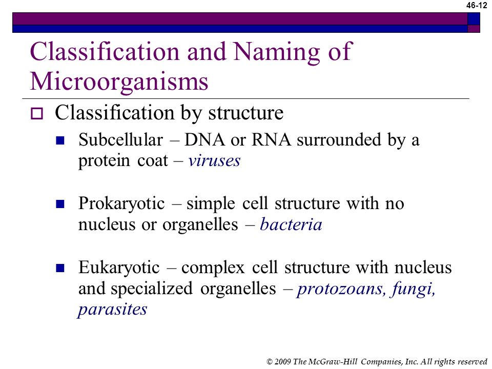 Classification and Naming of Microorganisms