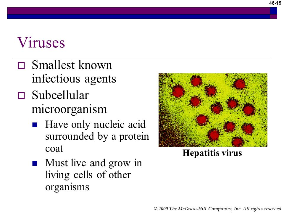 Viruses Smallest known infectious agents Subcellular microorganism