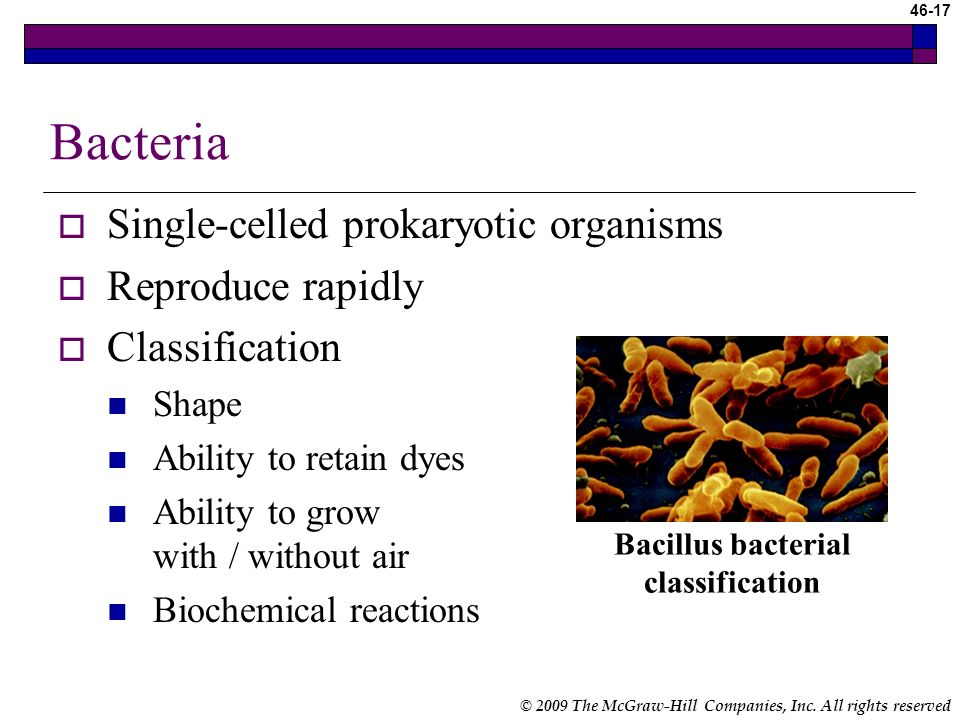 Bacillus bacterial classification