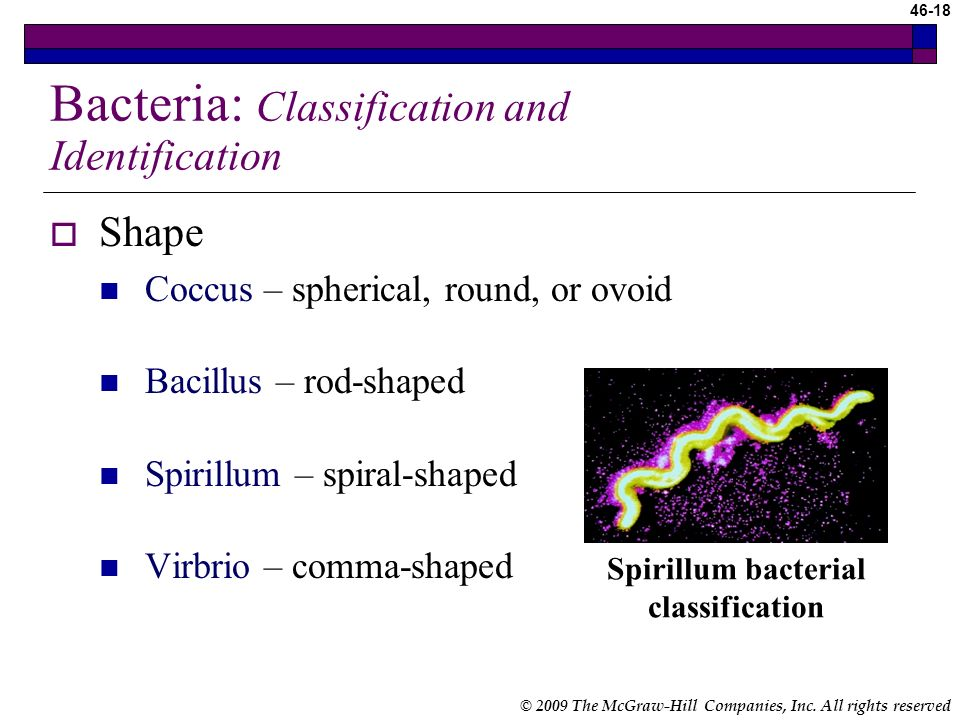 Bacteria: Classification and Identification