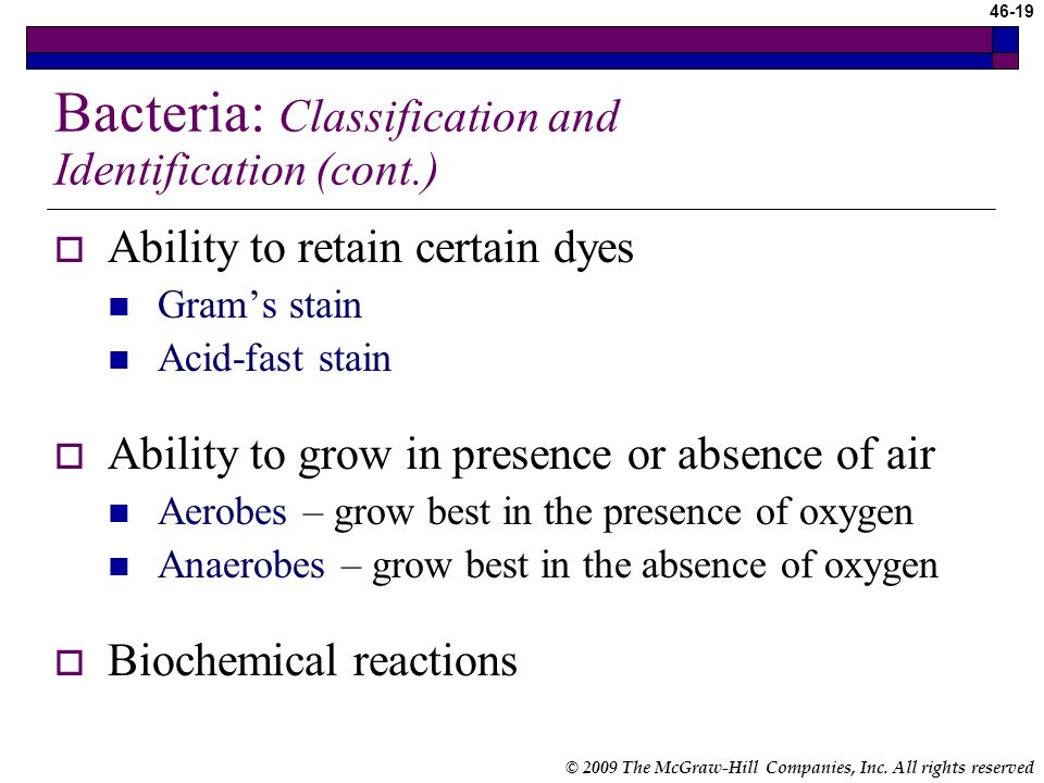 Bacteria: Classification and Identification (cont.)