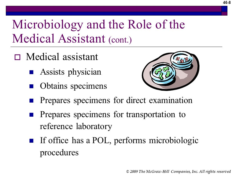 Microbiology and the Role of the Medical Assistant (cont.)