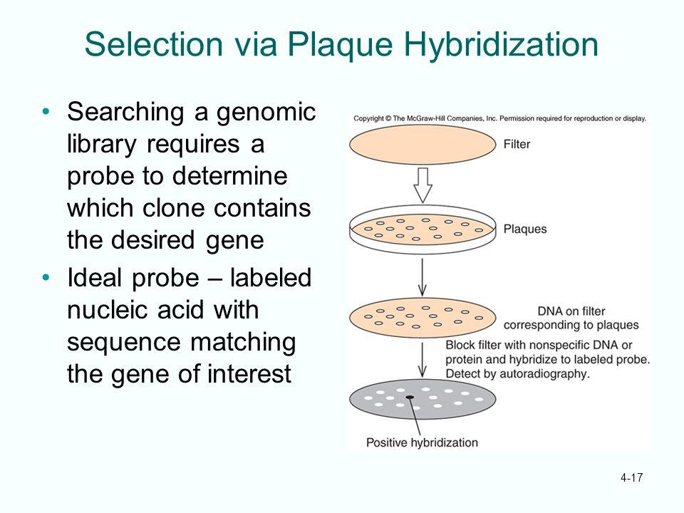 Selection via Plaque Hybridization