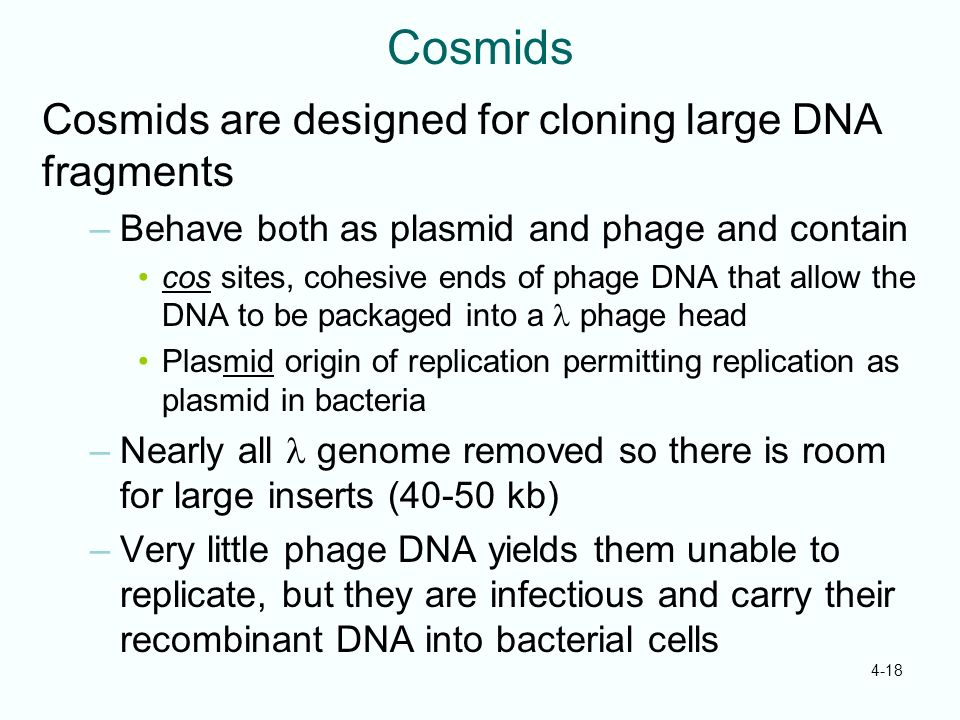 Cosmids Cosmids are designed for cloning large DNA fragments