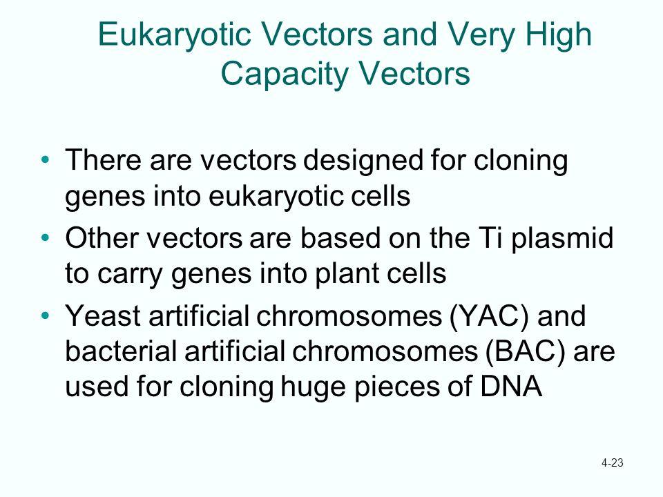 Eukaryotic Vectors and Very High Capacity Vectors