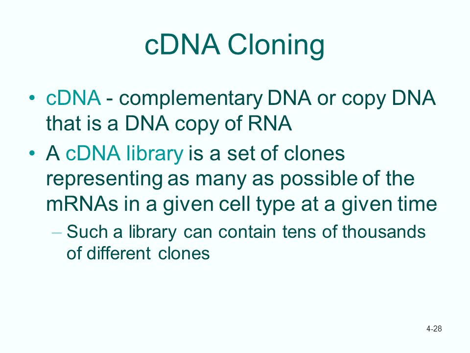 cDNA Cloning cDNA - complementary DNA or copy DNA that is a DNA copy of RNA.