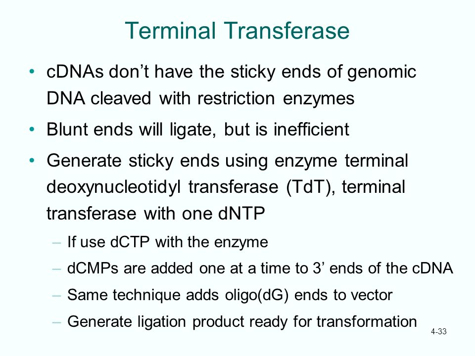 Terminal Transferase cDNAs don't have the sticky ends of genomic DNA cleaved with restriction enzymes.