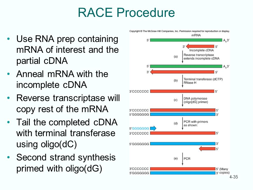 RACE Procedure Use RNA prep containing mRNA of interest and the partial cDNA. Anneal mRNA with the incomplete cDNA.