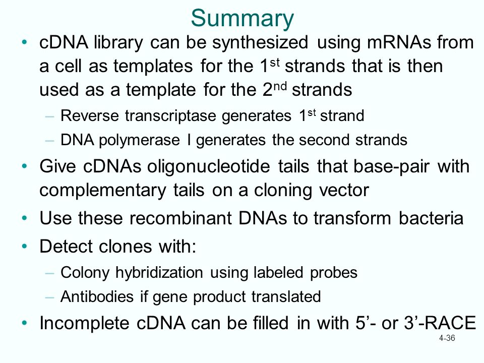 Summary cDNA library can be synthesized using mRNAs from a cell as templates for the 1st strands that is then used as a template for the 2nd strands.