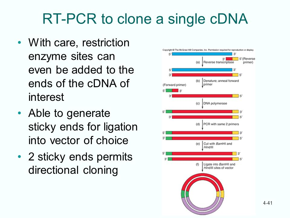 RT-PCR to clone a single cDNA