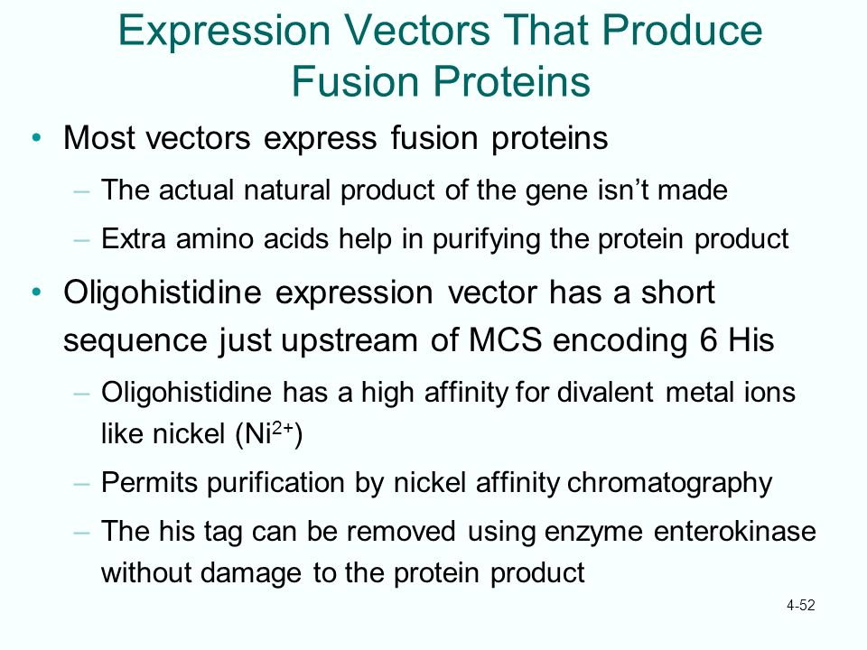 Expression Vectors That Produce Fusion Proteins