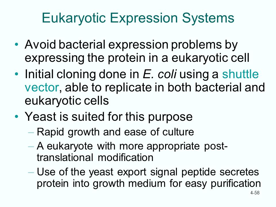 Eukaryotic Expression Systems
