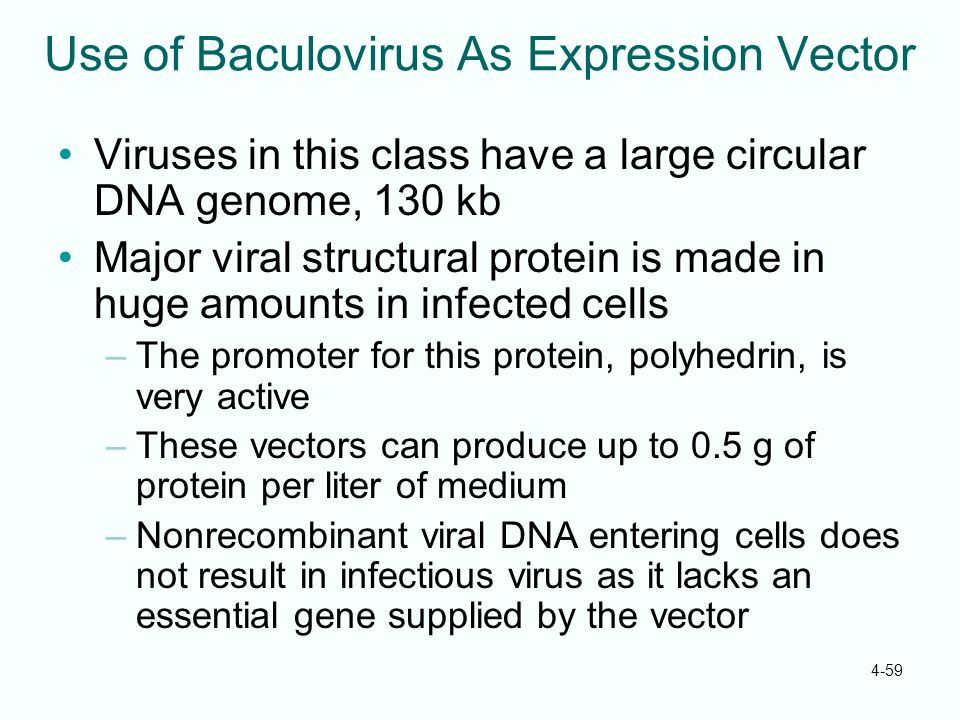 Use of Baculovirus As Expression Vector
