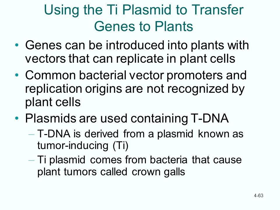 Using the Ti Plasmid to Transfer Genes to Plants