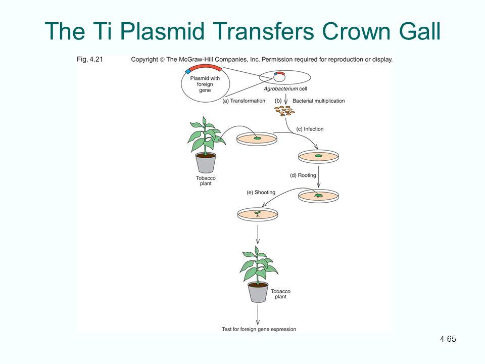 The Ti Plasmid Transfers Crown Gall