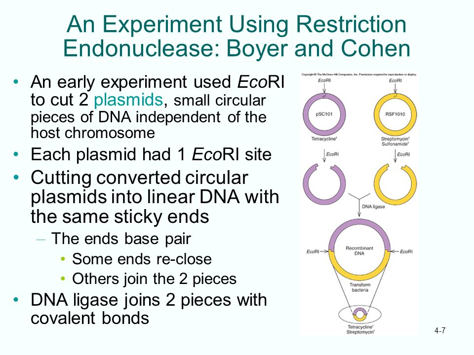An Experiment Using Restriction Endonuclease: Boyer and Cohen