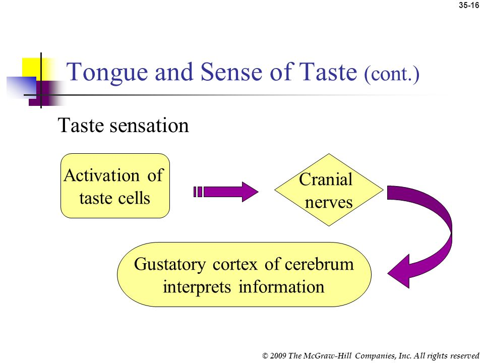 Tongue and Sense of Taste (cont.)