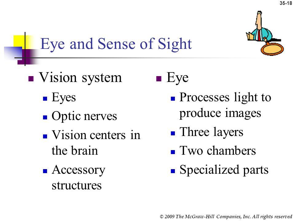 Eye and Sense of Sight Vision system Eye Eyes Optic nerves