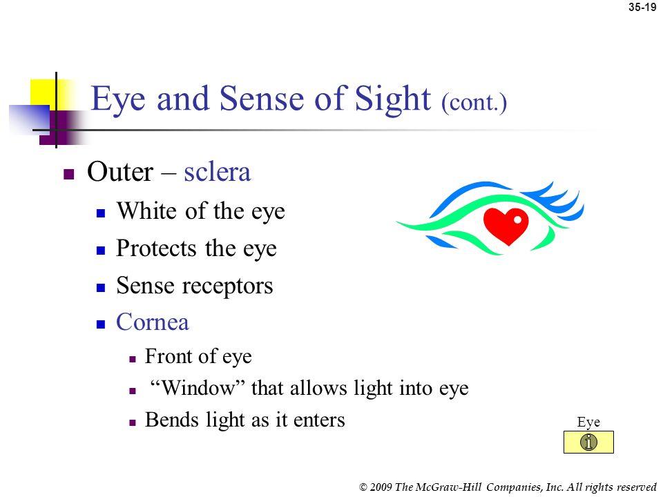 Eye and Sense of Sight (cont.)